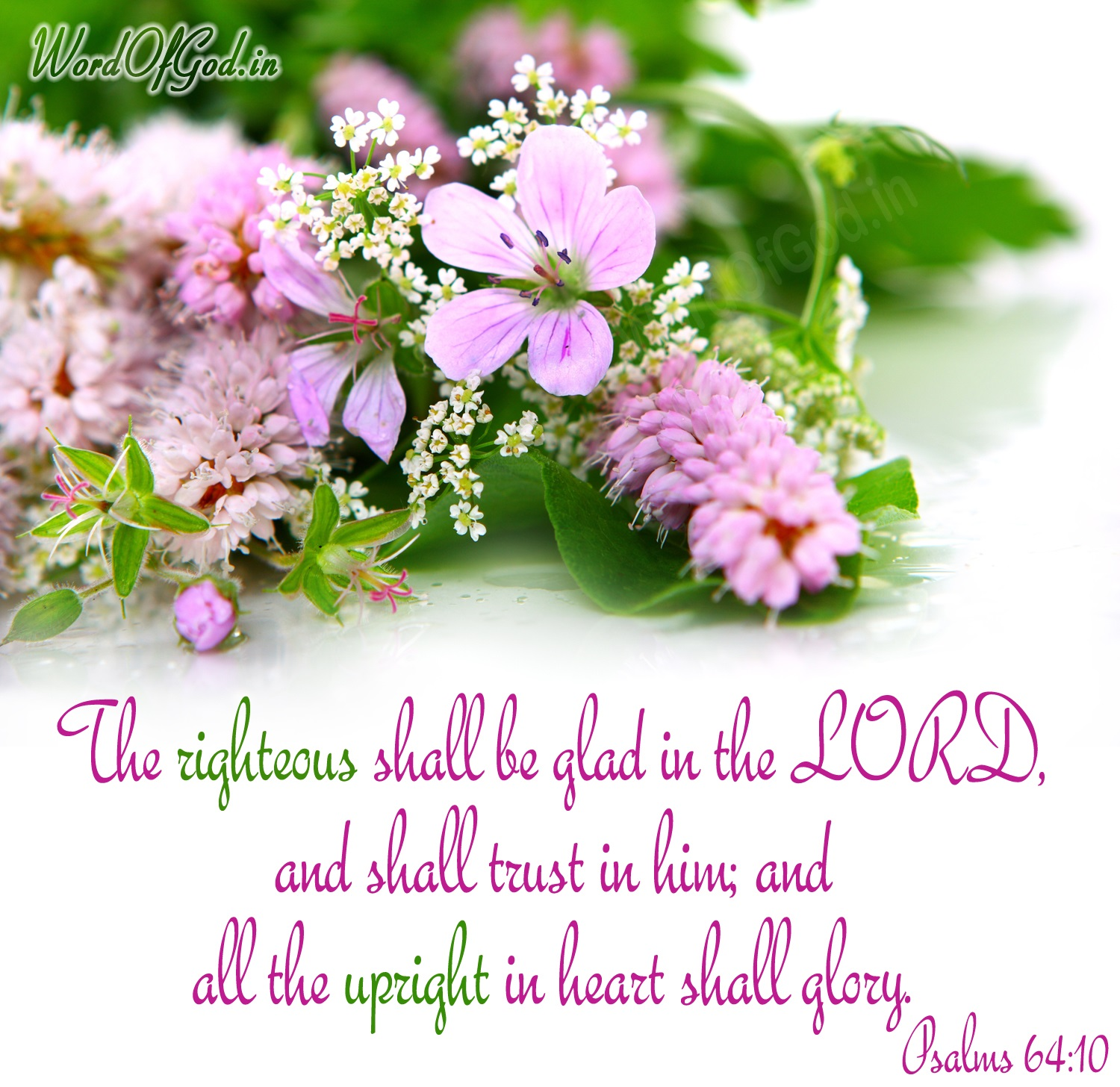 English-Promise-Cards-Psalms-64-10